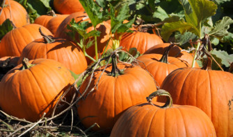 pumpkin 101