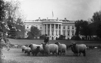 sheepwhitehouse