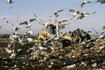 landfill-8