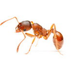 ants-in-washington-dc