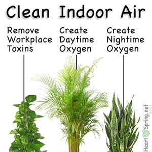 6 Plants For The Home That Naturally Purify Air